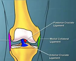 Animation of Knee Ligament Anatomy