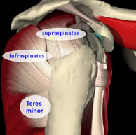 rotator cuff diagram